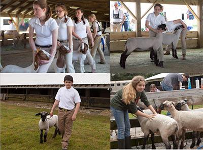 Cecil County Breeders Fair 2017