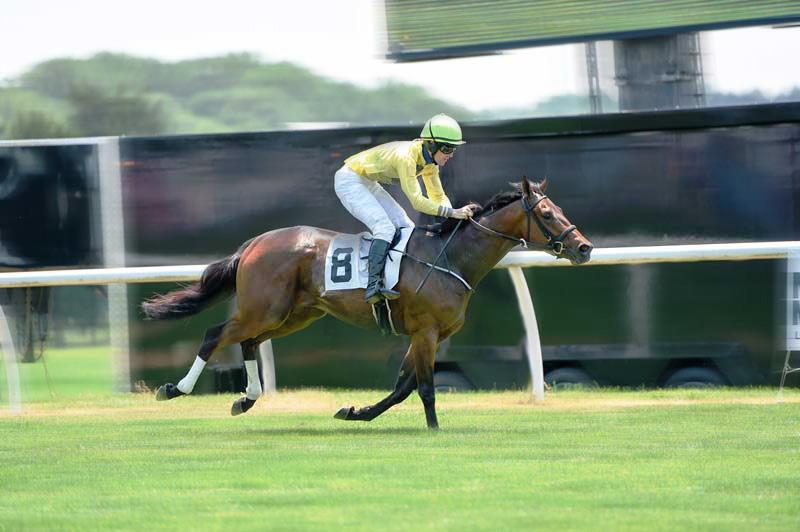Fair Hill Horse Racing